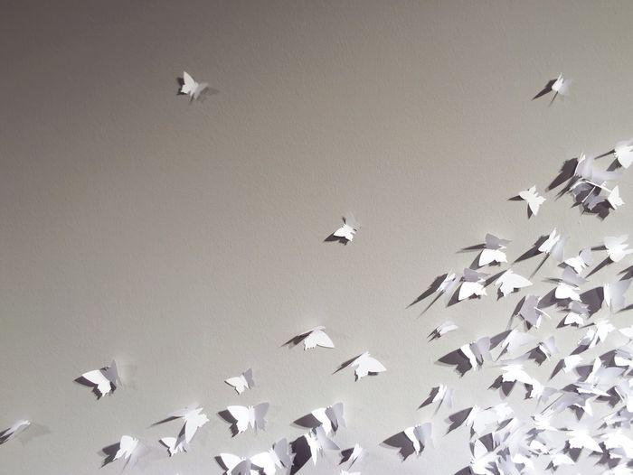 Paper butterflies on wall