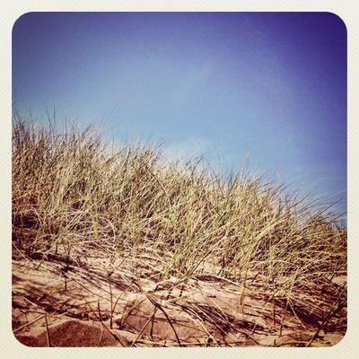 #sky #grass #sand ? #earlybirdlove #jj #jj_forum Beachychallenge Sky Grass Sand Popular Jj  Earlybirdlove Jj_forum Popularpage Alaniskoeblove Alaniskopop