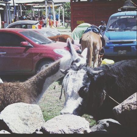 Amores extraños.♥ Traveling Obrajillo Peru Love