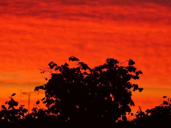 Hier avant la nuit Tree Arbre Ciel Et Nuages Ciel CIELFIE Skyfie Soleil Couchant Dramatic Sky Tranquil Scene Tranquility Nature Sunset Coucher De Soleil Beauty In Nature