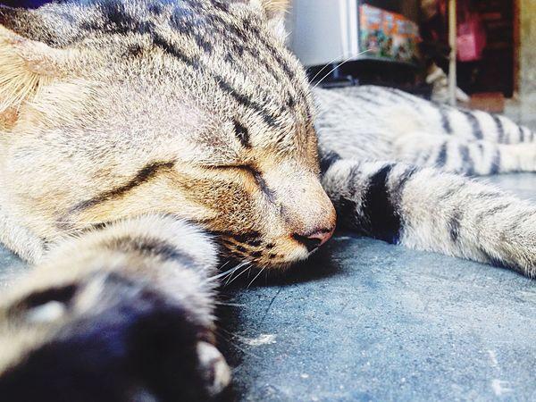 Miss Someone One Animal Domestic Animals Animal Themes Pets Domestic Cat Sleeping Animal Head  Close-up Indoors
