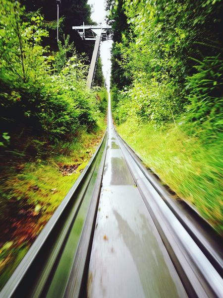 The Way Forward Road Transportation Water Tree No People Day Outdoors Nature WoodLand Woods And Color Bobsled In Forest