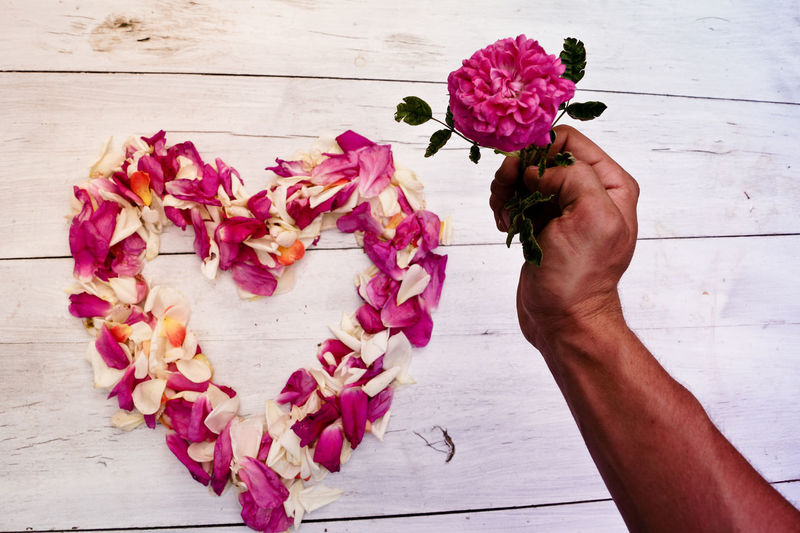 Midsection of person holding pink flowering plant