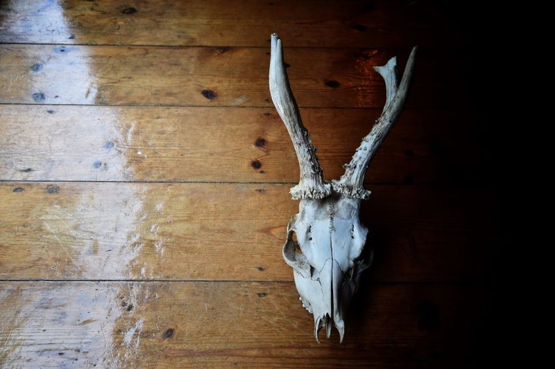 Halloween Skull Wood - Material Bone  No People Animal Body Part Wall - Building Feature Animal Skull Indoors