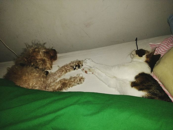 Amitié chienne et chatte