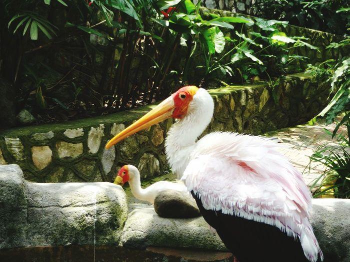 Bird Animal Themes Close-up MALAYSIA KUALA LUMPUR Zoo Eyemphotography No People Close Up