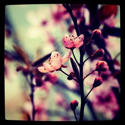 more springtime Flowers Flower Details Lobostudio Lobo_flowers