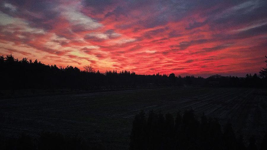 Sunset Sky Tree