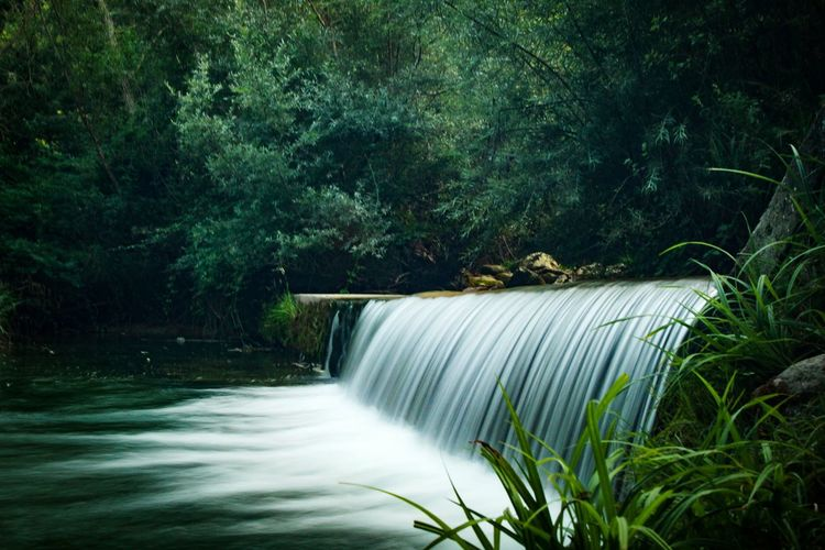 Italy Water Tree Waterfall Motion Forest Long Exposure Green Color Plant Flowing Falling Water Running Water
