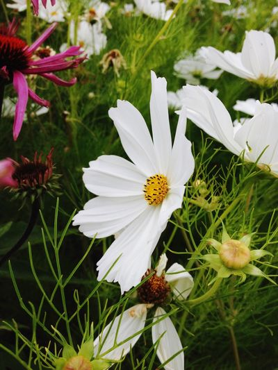 Flower Nature Petal Beauty In Nature Fragility White Color Flower Head Growth Close-up Freshness Blooming Plant Outdoors No People Day