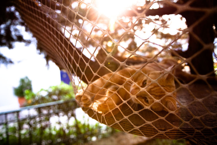 Cat relaxing by a tree house. Cats Of EyeEm Chilling GREECE ♥♥ Relaxing Summertime Animal Themes Cat Cats Chill Day Focus On Foreground Greece Greek Cats Low Angle View Nature No People Outdoors Protection Relax Relaxation Relaxing Moments Resting Sky Summer Tree