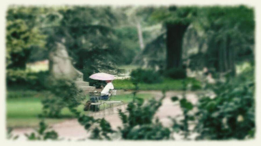 Jardin Du Luxembourg Paris Pluie D'été Rain lire sous la pluie
