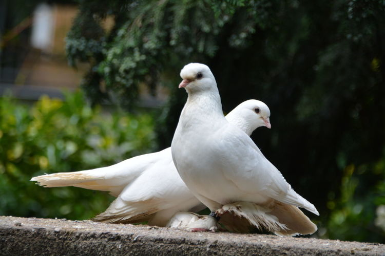 Close-up of doves perching on railing