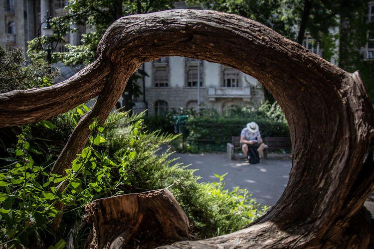 Rear view of men on tree trunk