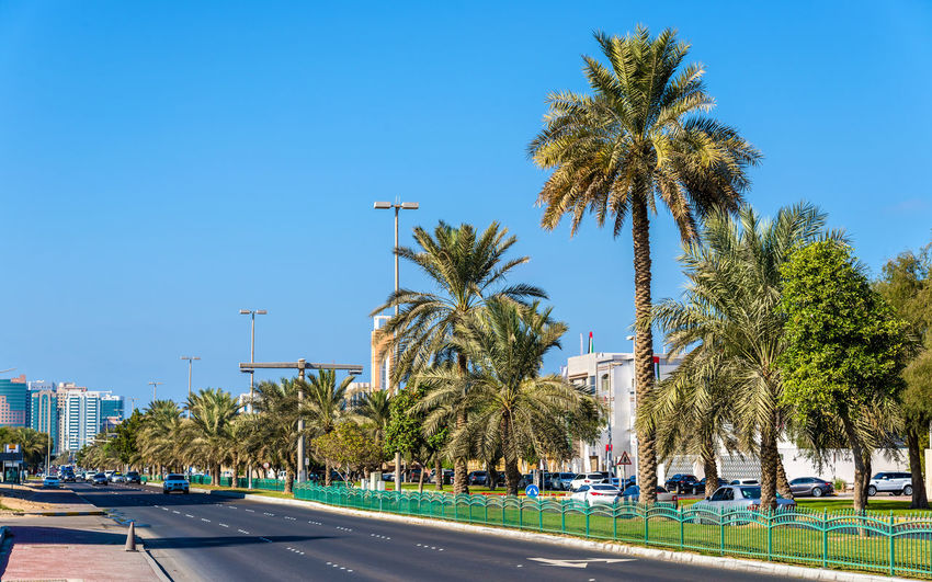 Palm trees by road against clear blue sky