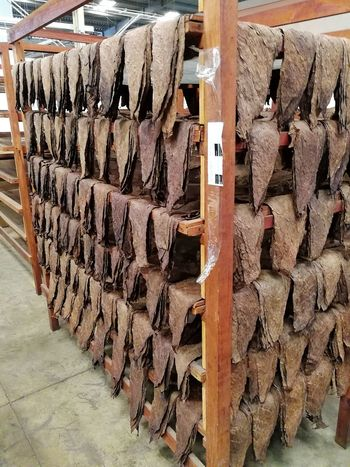 In A Row Large Group Of Objects Texture, Texture In Nature Cigars Making, Cigars Factory, Cigars Tobacco Tobacco Leaf No People Indoors  Dominican Republic Republica Dominicana