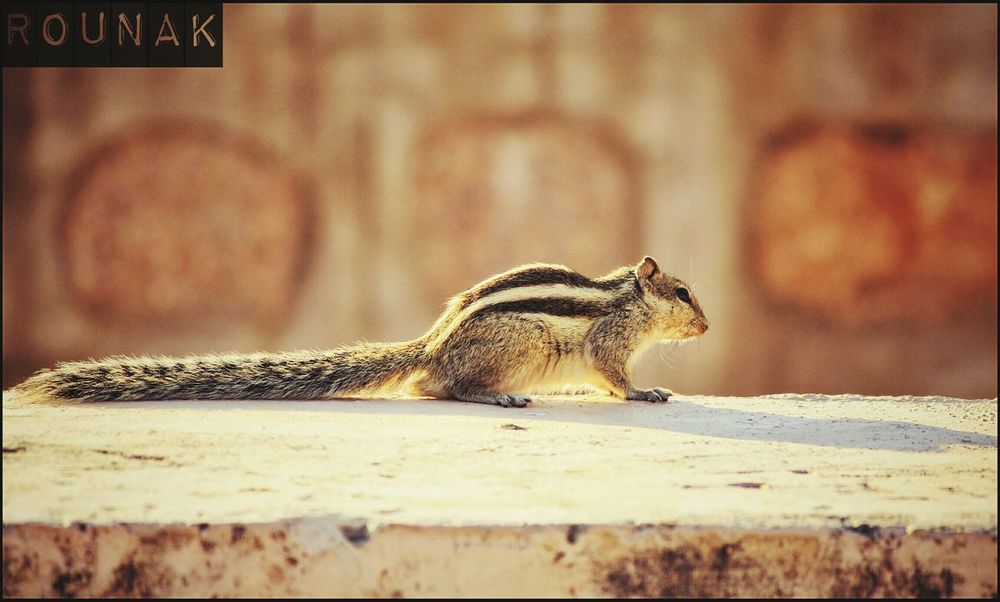 I'm so crazy that even squirrel thinks that I'm nuts! LOL :P .. Squirrel Squirrel Closeup Travel Diaries Canon1200d