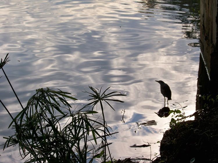 Animal Themes Animals In The Wild Bird Black And White With A Splash Of Colour Blue Sky Clouds In The Water Day Lake Light And Shadow Nature No People Outdoors Reflection Reflections In The Water Sky And Clouds Sky Reflections In The Water Water
