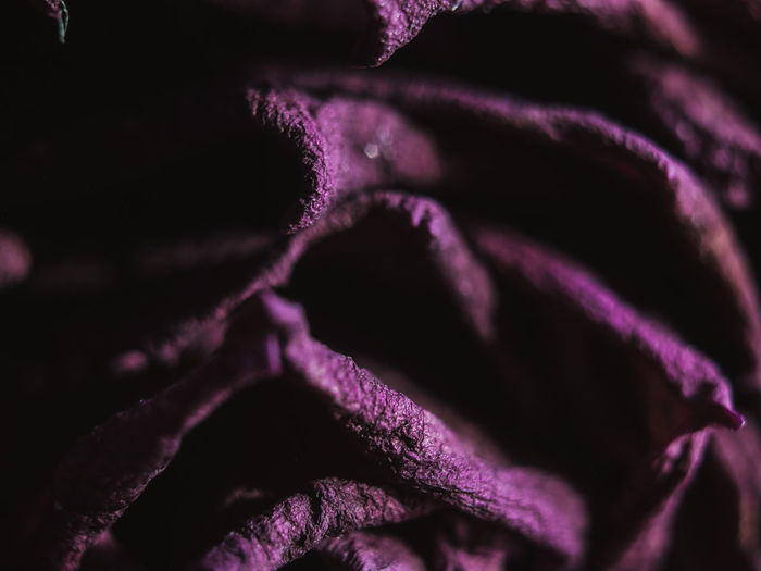 Canon EOS 600D mit Yongnuo 50mm 1.8... Macro Macro Photography Macro_collection Colors_of_day Yongnuo Shotwithlove Jacquelineschreiber Eyeemoninstagram Indoor_photograhy Roses Dofnature CanonEOS600D Canonglobal No People Red Rose Full Frame Backgrounds Abstract Purple Arts Culture And Entertainment Textured  Black Background