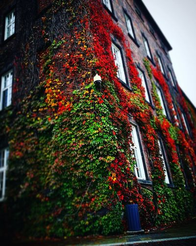 Low Angle View Architecture No People Red Day Built Structure Tree Outdoors Building Exterior Ivy Nature Sky Close-up