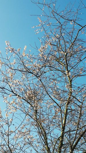 Spring in Swiss Cottage