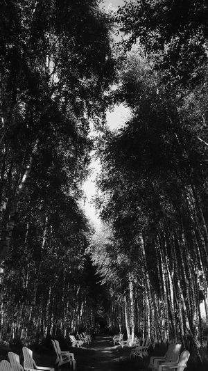 Black And White Friday Outdoors Tree Low Angle View Day Nature Sky Peaceful Nature Siting Portrait Sitting Here . Being Awesome . White Collection Summer Holidays Alone Time Poland Kołobrzeg Black And White Friday