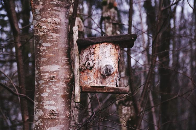 Birdhouse on tree at forest