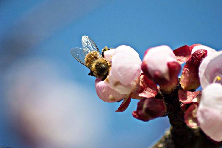 Workin Hard Bee Spring Is Coming