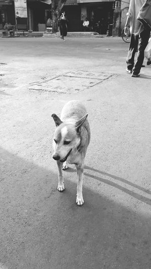 One Animal Animal Themes Mammal Street Domestic Animals Real People Road Outdoors Dog Pets Day One Person Dog Walking Dogsofinstagram Dog Of The Day Doglovers Dogs Of EyeEm Dogs Life Dogphoto Doggy Love Dogs_of_instagram Dogoftheday Dogstagram Doggydaycare Doggy Dog