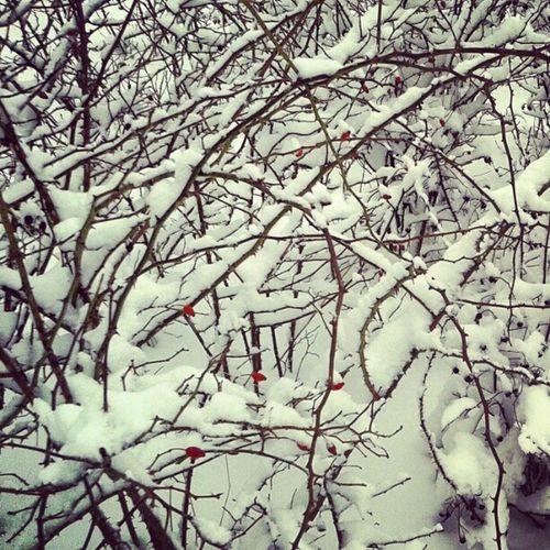 Sneeuw Snow Rodebesjes