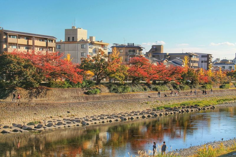 Architecture Autumn Autumn Colors Banks Building Exterior City Life Day Houses Japan Kyoto, Japan Kyoto,japan Outdoors Red Leaves Reflection River Town Tree Walk Water