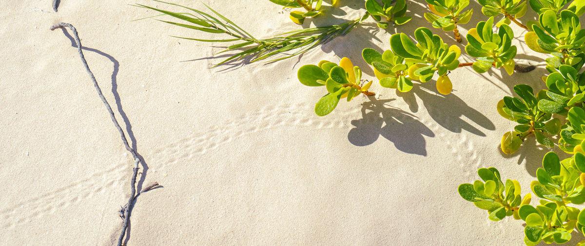 Shadow of tree on sand
