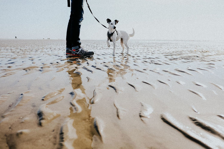 Animal Themes Beach Beach Day Day Dog Excitement Jack Russell Low Section Loyalty Mindfulness Nature One Animal One Person Outdoors People Pets Playful Sand Sea Sky Smart Sportive Terrier Watching Water