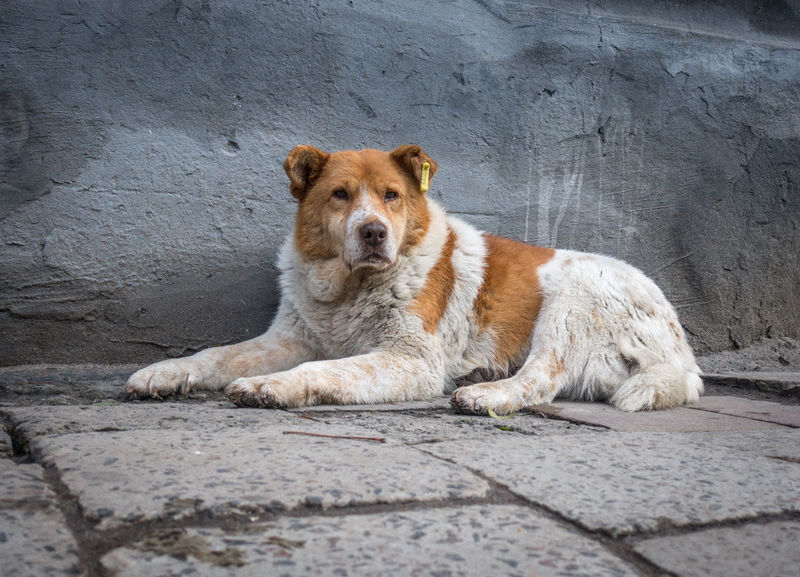 Abandoned Animals Animal Themes Beautiful Dog Dog Eternal Hope Faithful Dog Fidelity  Friendship Homeless Dog Hopelessness Human Betrayal Irresponsible People Loneliness Loneliness And Sadness Lonely Dog Old Buildings Outdoors Problem Of Mankind Real Friend Sad Dog Sadness Stray Animals Vagrant Dog