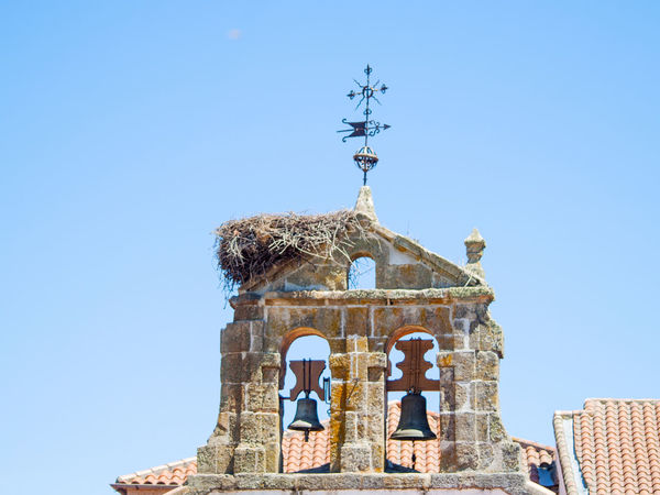 Architecture Church Nesting Ornamental Spirituality Wildlife & Nature Belfry Bell Tower Belltower Ciconia Ciconia Ciconia Environment Environmental Conservation Nest Nest Building Nesting Birds Ornaments Outdoors Religion Religious  Religious Architecture Stork Nest Vane Vane We Weather Vane