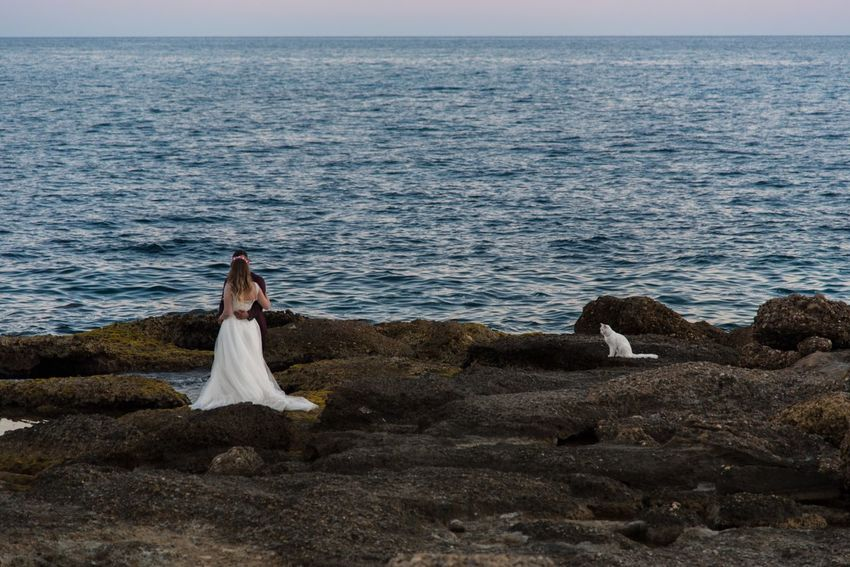 Cat's blessings for wedding Bride Couple Sea Shore White Cat Wedding Couple Sea Beach Adults Only Nature Wedding Dress Horizon Over Water Outdoors Beauty In Nature