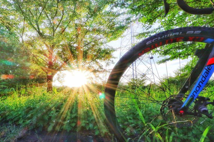 夜明け After The Rain Nature Morning Dew 朝日 EyeEm Cycling Bicycle Roadbike Bike Nature Good Morning Morning Morning Ride  Sunrise Sunshine EyeEm Best Shots Nature_collection EyeEmNewHere EyeEm Nature Lover EyeEm Gallery サイクリング ロードバイク 自転車 Sunrise - Dawn Riding Spoke Mountain Bike Shining Pedal