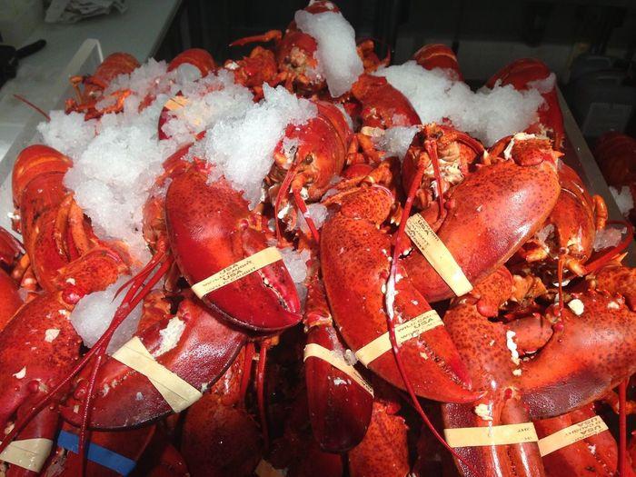 Lobster Food Ice