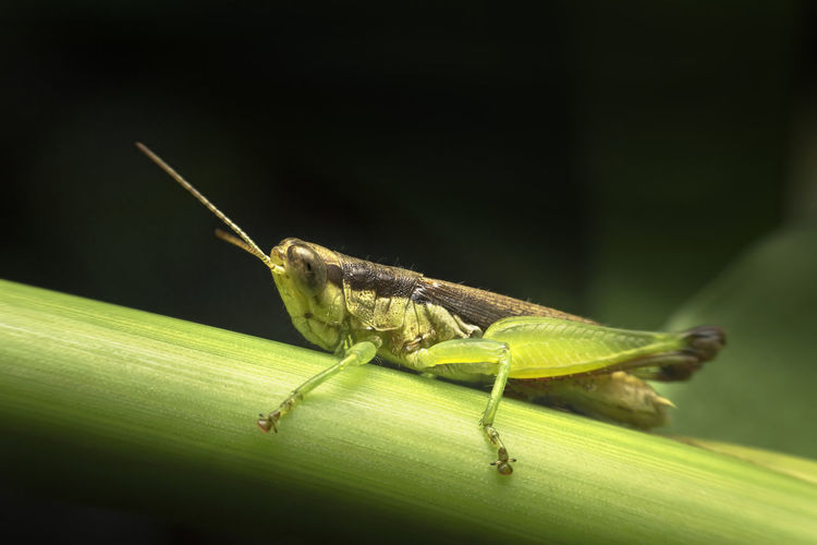 grasshopper on