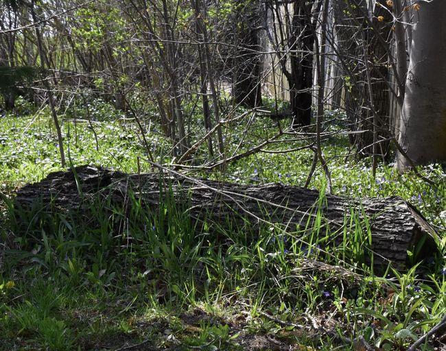 Fallen tree on field in forest