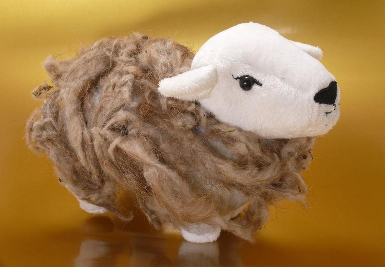 Animal Themes Close-up Domestic Animals Golden One Animal Schaf Im Wolfsfell Sheep Still Life Toy Wolf Wolfsfell Wulf Zoology