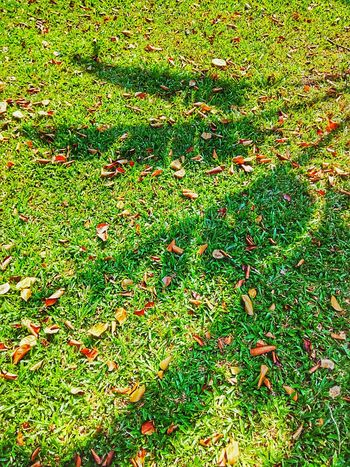 Light And Shadow Light Shadow Shadow On The Floor Shadow On The Ground Tree Shadow Nature Nature Photography Nature Collection Shadow Photography Shadow Collection Shadow Of A Tree Shadow Of Nature Shadow And Light Shadow Of Leaves Shadow Of Leaf Leaf Shadow Leaves Shadow