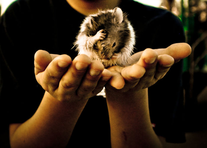 Animals Cleaning Friendship Hampster Holding Human Hand