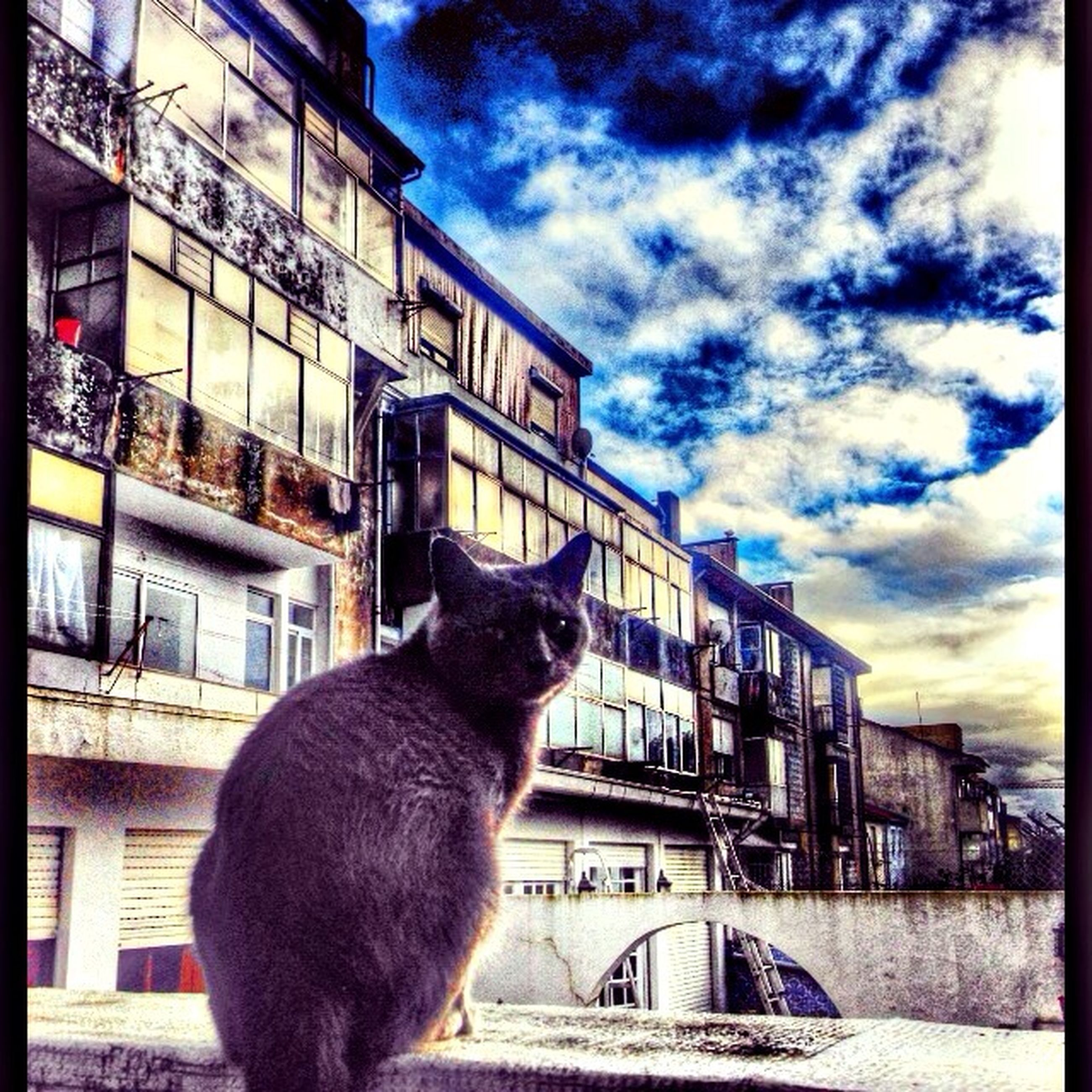 building exterior, architecture, built structure, domestic animals, one animal, animal themes, sky, mammal, pets, window, cloud - sky, cloud, house, residential building, residential structure, railing, city, dog, building, outdoors