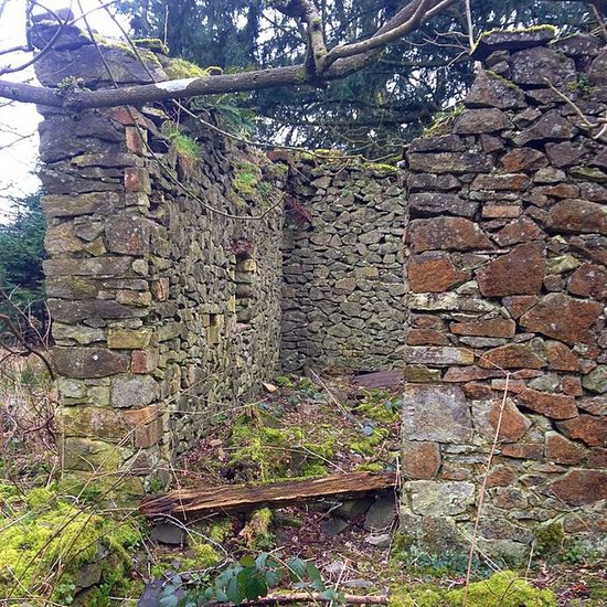I wonder who used to live here. Spooky Woods Abandonedbuilding Nature Natureovertaking Witch Blairwitch Stone