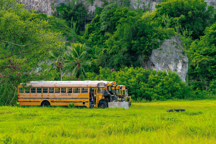 old school bus Plant Mode Of Transportation Transportation Tree Green Color Land Vehicle Day Land Nature Grass Public Transportation Field Travel Outdoors Growth Non-urban Scene Yellow No People Environment Landscape