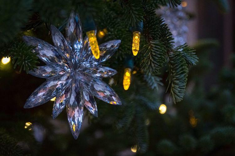 Christmas Christmas Tree Tree Night Christmas Lights LongwoodGardens The Week On Eyem Christmas Decoration No People EyeEm Best Shots
