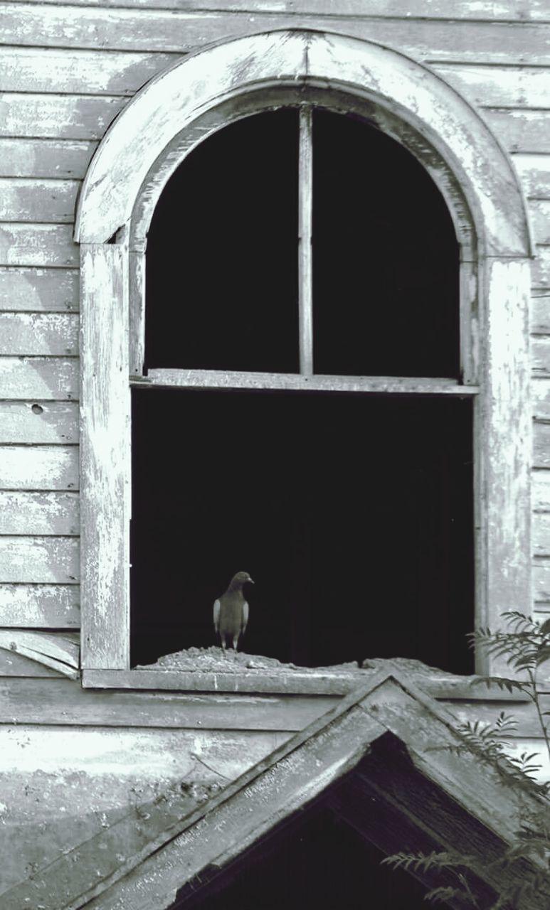 window, architecture, built structure, arch, one animal, animal themes, building exterior, door, day, no people, bird, doorway, animals in the wild, outdoors, open door, perching