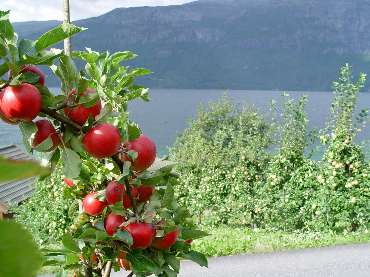 RED BERRIES GROWING ON PLANTS