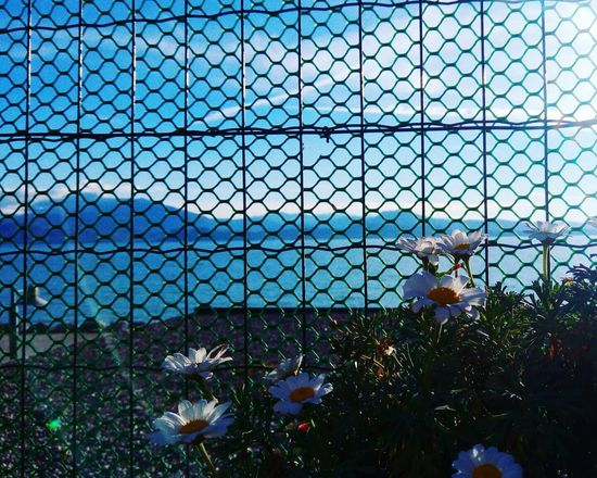 Flower Flowers Flower Collection Flowers, Nature And Beauty Flower Photography Flowing Water Flowers,Plants & Garden Flowerlovers Chainlink Fence Day Sky Tree Outdoors No People Architecture Nature City